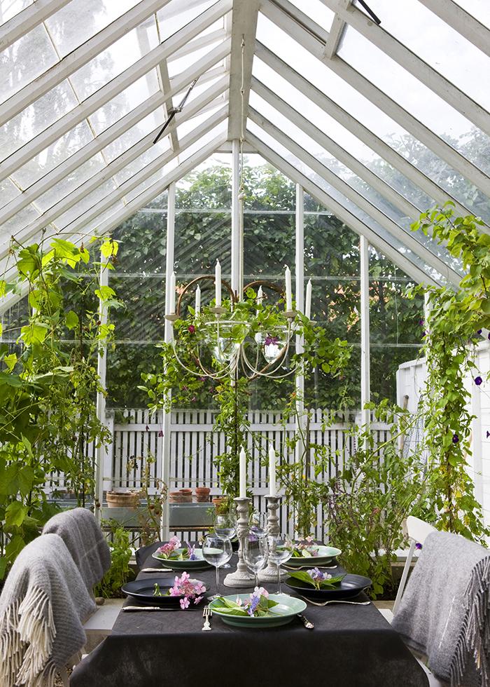 Rama in matplatsen i växthuset eller orangeriet med gröna växter.