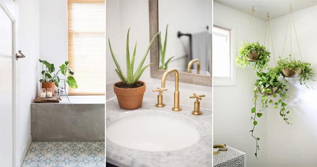 Så inreder du med växter i badrummet – 7 inspirerande tips 3b775f838b47e