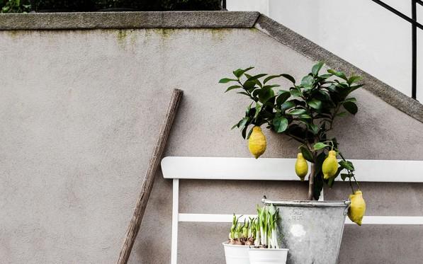 Veckans stilleben | Vårgrönt på trapp...