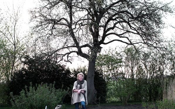NYHET | Välkomna till Daniella´s träd...