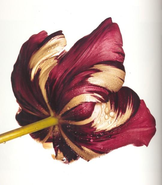 Irving-Penn_Flower_11-540x615